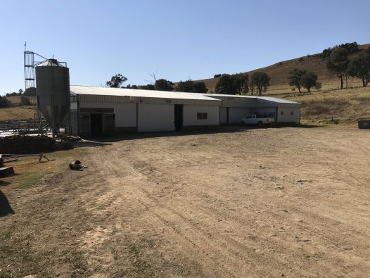 Dairy milking shed 1