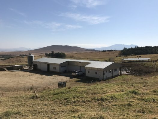 Dairy milking shed 2